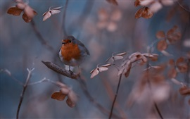 Preview wallpaper Nature, bird, twigs, bokeh
