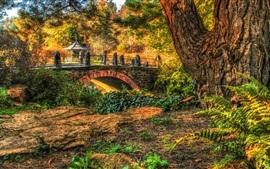 Parque, árboles, puente, hierba