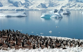 Pinguins, mar, geleiras