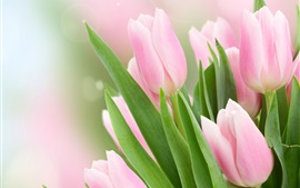 Preview wallpaper Pink tulips, leaves, blurry background