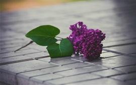Aperçu fond d'écran Fleurs pourpre lilas, feuille