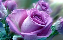 Preview wallpaper Purple rose