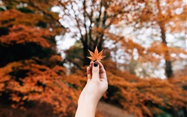 Red maple leaf in hand