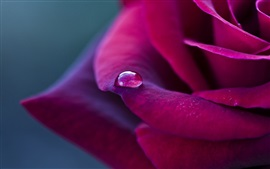 Preview wallpaper Red petals rose, dew