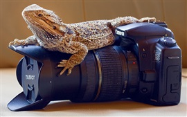 Preview wallpaper Reptile, lizard, camera