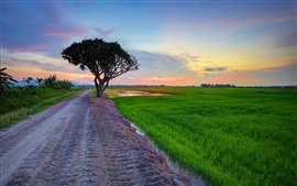 Preview wallpaper Road, field, grass, tree, evening