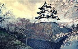 Цветок сакуры, весна, храм, Япония
