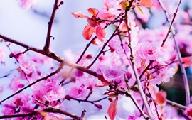 Preview wallpaper Spring, pink flowers bloom, twigs, tree