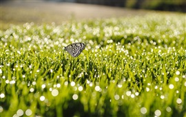 Summer, grass, after rain, butterfly, water drops