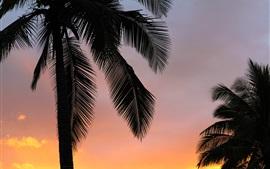 Pôr do sol, palma, árvores, silueta