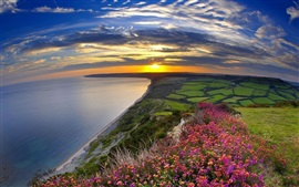 Preview wallpaper Sunset, sea, coast, flowers, fields, clouds