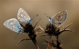 Preview wallpaper Three butterflies, plant