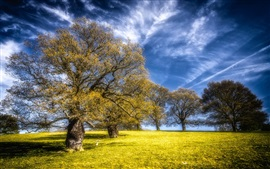 Trees, grass, blue sky, beautiful nature