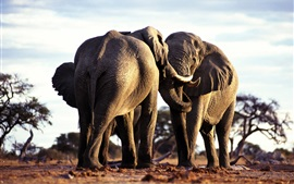 Preview wallpaper Two elephants friendship