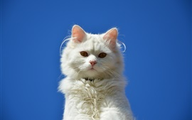 Preview wallpaper White cat, blue sky