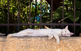 Preview wallpaper White cat lying on fence side