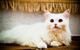 Preview wallpaper White cat rest, eyes, look