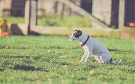 Белая собака сидит на траве