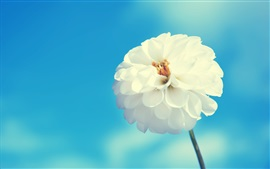 Preview wallpaper White flower, blue sky