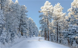 Winter, forest, trees, road, snow, white world