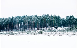 Winter, forest, trees, snow