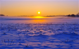Winter, snow, grass, sunset