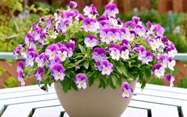 Preview wallpaper A bowl of pansies, purple white petals