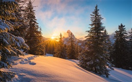 Preview wallpaper Alps, winter, snow, trees, sun rays