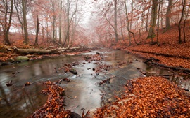 Autumn, forest, river, red leaves, fog