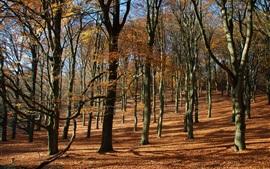 Otoño, bosque, árboles, pendiente, luz del sol
