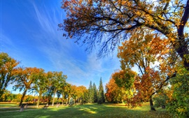 Autumn park, trees, grass, bench, sunshine, blue sky