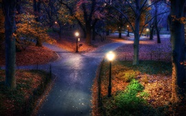 Autumn, park, trees, night, lights, path