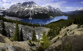 Preview wallpaper Banff National Park, Peyto Lake, mountains, forest, Canada