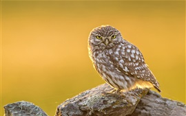 Preview wallpaper Bird close-up, owl, stones, sunshine