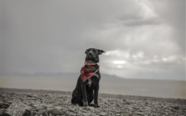 Black dog, scarf, stones, sky, clouds
