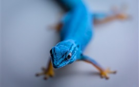 Preview wallpaper Blue lizard