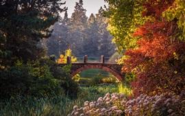 Preview wallpaper Botanical Garden, Berlin, Germany, trees, bushes, pond, bridge, autumn
