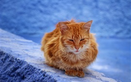 Brown cat rest, blue background