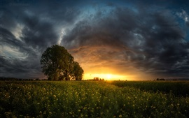Bulgaria, Sofia Valley, fields, trees, clouds, sunset