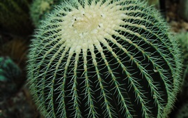 Preview wallpaper Cactus, ball, spines
