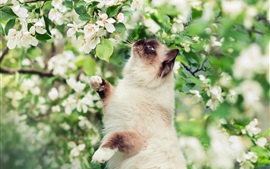 Cat and white flowers, tree, spring