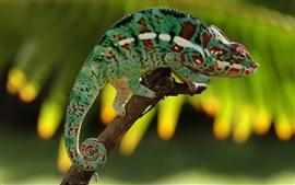 Camaleón de descanso, verde, rama