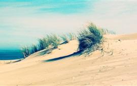 Coast, beach, sand, grass, wind