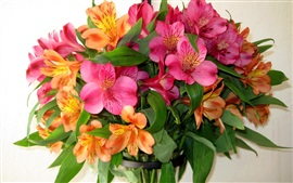 Preview wallpaper Colorful alstroemeria, little lily flowers