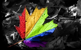 Preview wallpaper Colorful maple leaf, rainbow colors