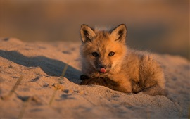 Preview wallpaper Cute little fox in the beach