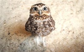 Preview wallpaper Cute owl look at you