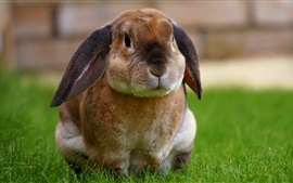 미리보기 배경 화면 귀여운 토끼 풀밭에 앉아