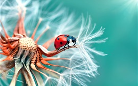 Preview wallpaper Dandelion and ladybug macro photography