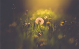 Preview wallpaper Dandelion, bokeh, summer